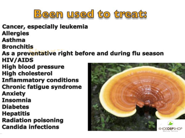 how to cook reishi mushroom