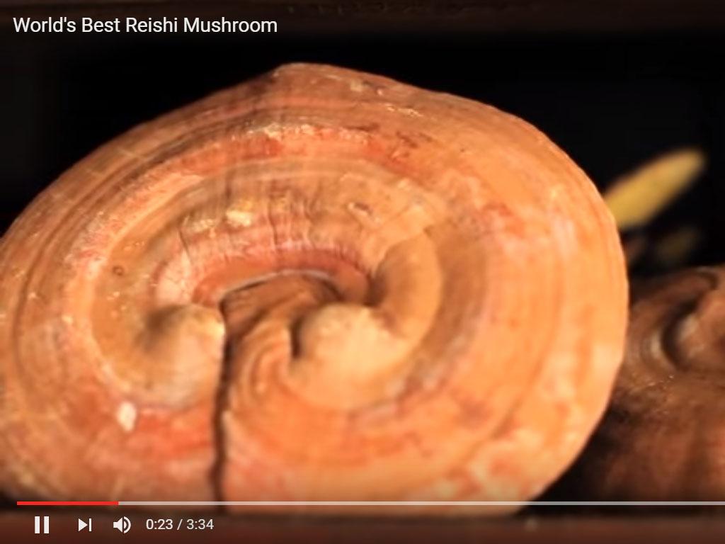 World%&&&%s Best Reishi Mushroom